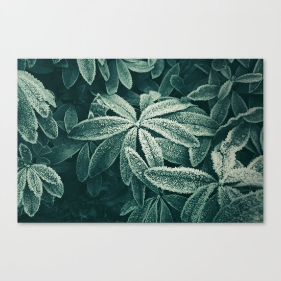 Frozen Greens Canvas Print