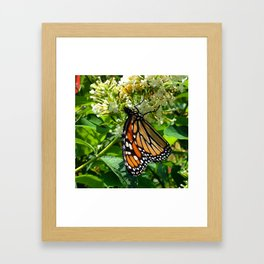 Monarch Butterfly * Framed Art Print