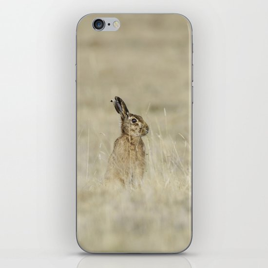 Brown hare iPhone & iPod Skin