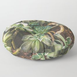 Hens and Chicks Floor Pillow