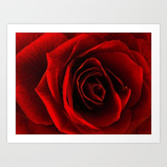 rose d'amour Art Print