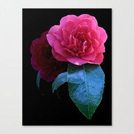 Pink Camellia  Canvas Print