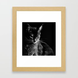cat in black and wight Framed Art Print