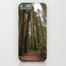 Redwood Forest Adventure VII - Nature Photography iPhone Case