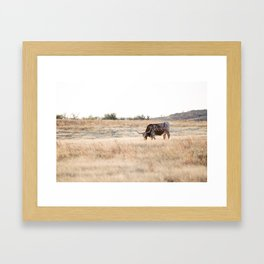 Longhorns 01  Framed Art Print