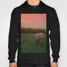 Scottish Highland Steer Hoody