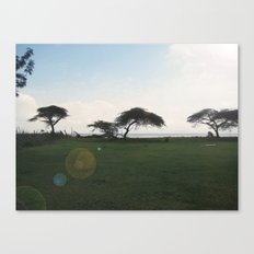 Acacia Field,Ethiopia Canvas Print