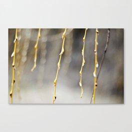 Golden Drop  Canvas Print