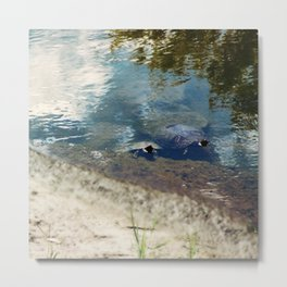 Two Turtles Metal Print