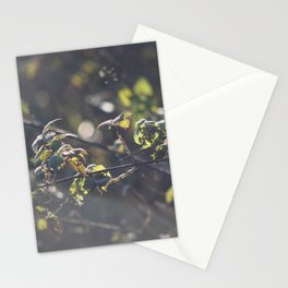 Nettles Stationery Cards