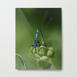 blue on green Metal Print