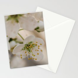 Plum Blossoms Stationery Cards