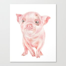 Baby Pig | Watercolour | Baby Animal Art | Animals Canvas Print