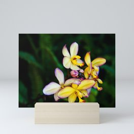 Pretty Plumeria, Hawaii's Flower Mini Art Print