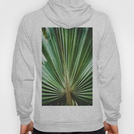 Aged & Colorized Wide Palm Leaves 2 Nature / Botanical Photograph Hoody
