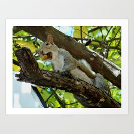 Mouthful squirrel Art Print