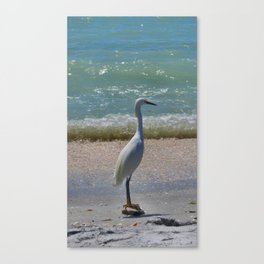 Standing in Wait Canvas Print