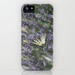 Papilio Machaon iPhone Case