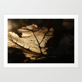 the life of a leaf Art Print
