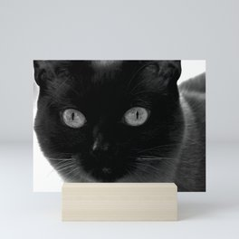Siamese cat, black and white photography Mini Art Print