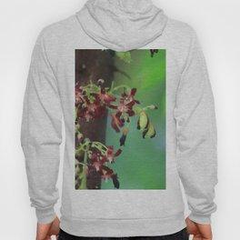 Starfruit Hoody