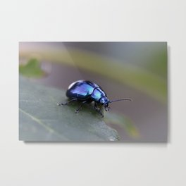 Metallic beetle Metal Print