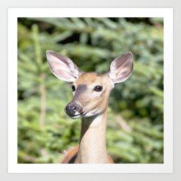 Watercolor Deer, Eastern Whitetail 03, Cape Breton, Canada, Who Me? Art Print