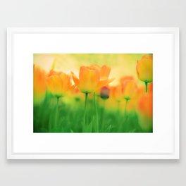 To Gather Orange Blossom Framed Art Print