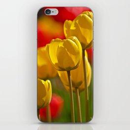 yellow tulips iPhone Skin