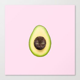 AvoCATo Canvas Print
