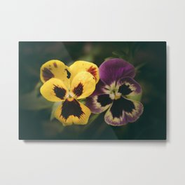 Yellow and Purple Pansy Flowers Metal Print