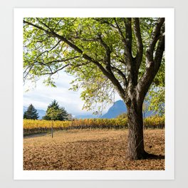 Oak And Grapevines Art Print