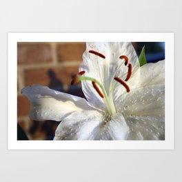 11th Anniversary Lillies #2 Art Print