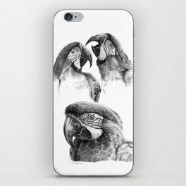 Macaw study SK0114 iPhone Skin