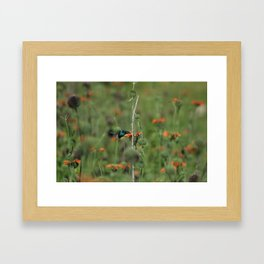 Sparkling Violetear Hummingbird and Orange Flower Framed Art Print