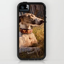 Wonder Whippet Photograph iPhone Case