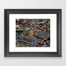 Winters Robin Framed Art Print
