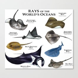 Rays of the World's Oceans Canvas Print