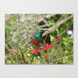 Honey Bird Canvas Print