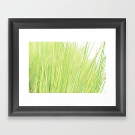 Marsh Grass Framed Art Print