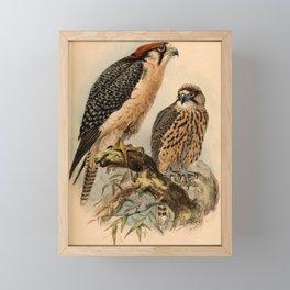Falco biarmicus 1884 Framed Mini Art Print