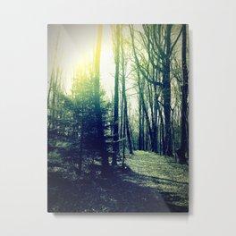 Harsh Morning Light Metal Print