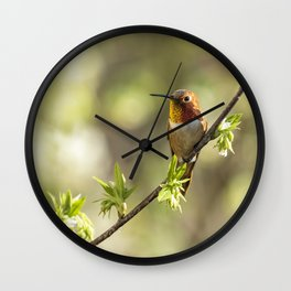 Male Rufous Hummingbird on a Branch Wall Clock