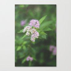 Floral I Canvas Print