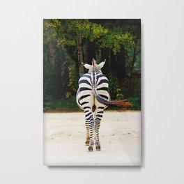 Shy Zebra Metal Print