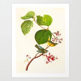 Pine Swamp Warbler Bird Art Print
