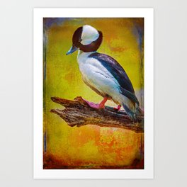 Finer Feathered Friends: Bufflehead Duck Art Print