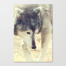 Wolfs Beauty Canvas Print