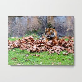 Leaf Play Metal Print