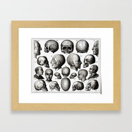 Ratio of Lobes Responsible for the Psychological Type of Person (Phrenology) Framed Art Print